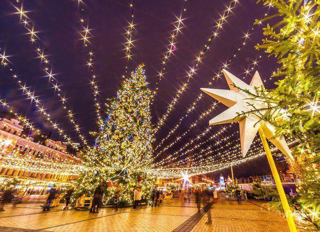 New Year 2020: what will be the main tree of Ukraine